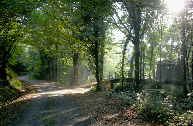 belgrad_forest_turkey