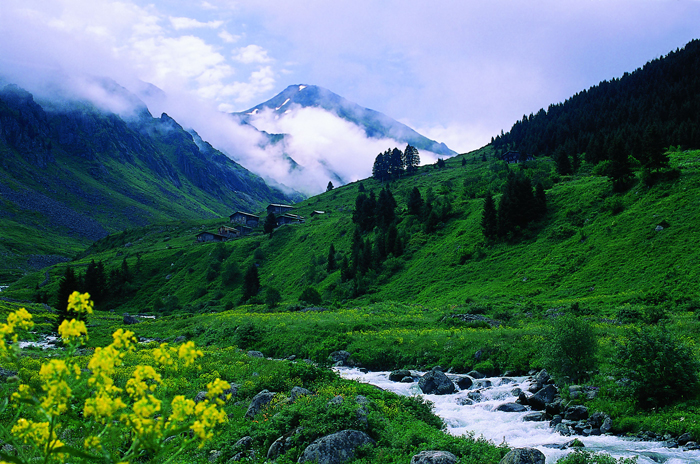 rize01