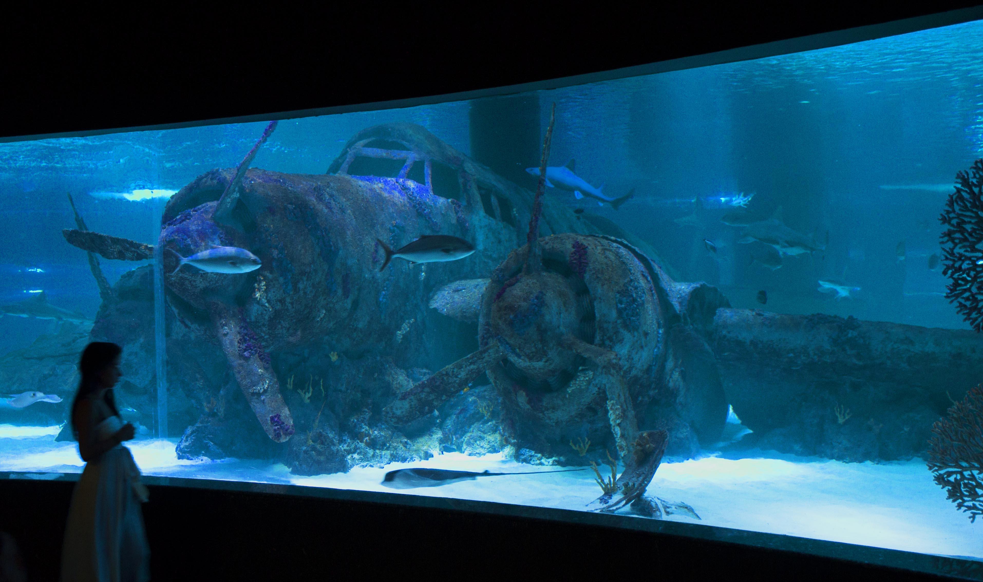Antalya-Aquarium-2