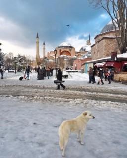 ثلوج تركيا 2016
